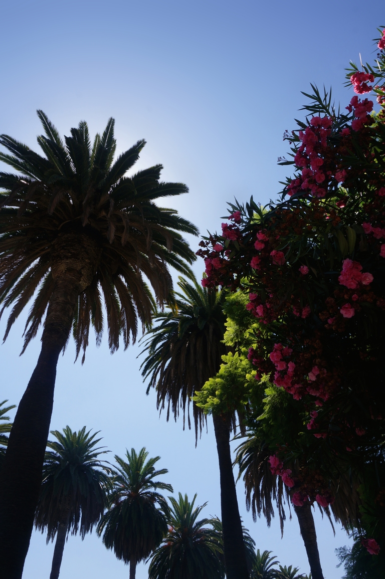 Palm trees and bougainvillea